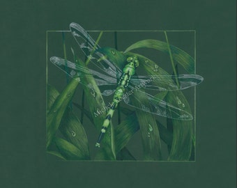"Colored Pencil Art Print ""Shades of Green"" Dragonfly Wall Art/Giclee Art Print"