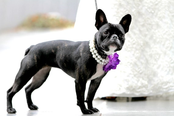 Pearls and a Purple Rose Dog Necklace