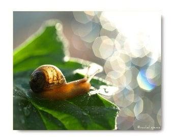 Baby Snail in the Morning Light Woodland Scene Forest Magical Light Bokeh Tiny Snail