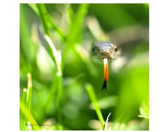 Snake in the Grass Photograph Affordable Home Photography Prints Nature Photography Nature Lover Woodland Scene Snake Green Grass