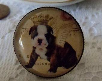 Ring Angel Bulldog Puppy