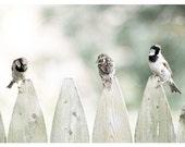 Nature Photograph, pale green, gray, birds, Tweet Tweet, nature fine art print