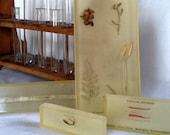 Antique Lumbricus t. worm lucite scientific specimen by The Sanatorium