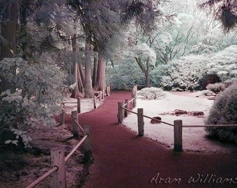 Path 4 - Infrared Photograph - 8.5 x 11