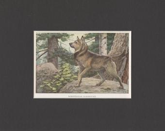 1919 Vintage Norwegian Elkhound Dog Print