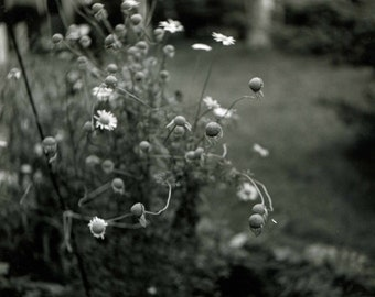 Mom's Garden 11 x 14 Silver Gelatin Photograph in 16 x 20 Black Matte