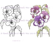 Digistamp Instant Download. Pansies  Digital stamp and coloured stamp - Digi Stamp - floral - art for cards and crafts