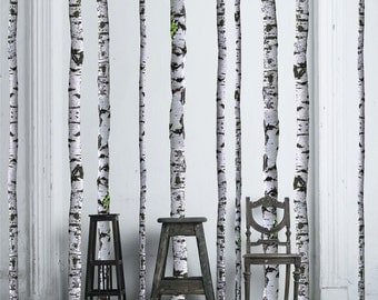 Birch Tree Wall Decals - 9 ft tall (Quantity of 5)