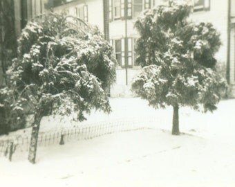 1940s Snow on Trees Front Yard City Town Winter Vintage Black White Photo Photograph