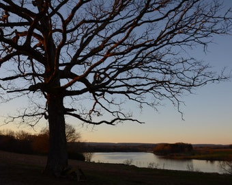 "Tennessee Tree Photo titled Sunset without the Cranes -- 8 x 10"" on Fine Art Paper"