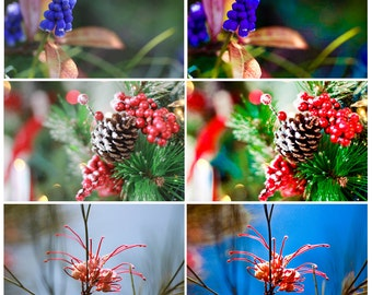Lightroom preset fascinating flowers INSTANT DOWNLOAD