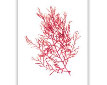 Large Coral Beach Art Seaweed Print Vibrant Coral 13x19 Botanical Artwork, Ocean, Coastal Living, Beach, Wall Decor
