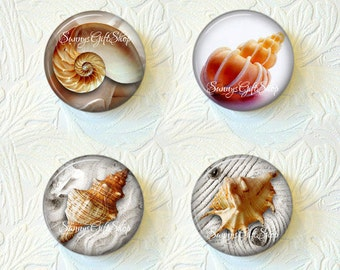 Shell Magnets, Ocean Magnets, Kitchen Magnets,Nature Magnets, Magnet Set of 4, Buy 3 Get 1 Free 137-MS