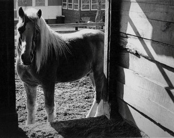 Horse Black & White Fine Art Photograph - STAND - Rustic Silver Grey Equestrian, Cowboy Western Pony Wall Hanging - Original 35mm Film Print