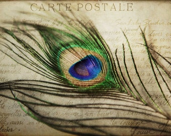 Carte Postale : peacock feather vintage french postcard love letter art nouveau blue green iridescent home decor 8x12 12x18 16x24 20x30