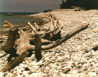 Driftwood Log on Pebble Beach Nature Photography Blank Note Card Summer at the Beach All Occasion Card Rustic Natural Scene