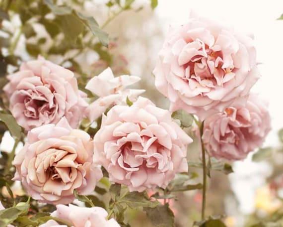 rose photograph pastel pale pink green girls room decor. Black Bedroom Furniture Sets. Home Design Ideas