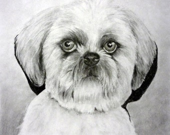 Custom Pet Portrait  From Your Photo - 11x14 Original Dog or Cat Pencil Drawing From Your Photograph