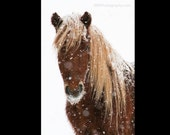 Horse in Ice Print
