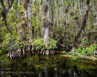 Florida Everglades Photograph - Wetlands of Big Cypress