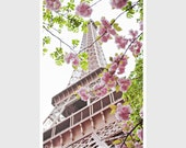 Cherry Blossoms at the Eiffel Tower - Springtime Paris dreamy home decor floral pink white 8x12 and up - Original Fine Art Photography