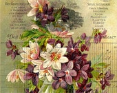 violets - printable download vintage large image flowers digital collage sheet iron on transfer fabric wall art decor label tag ephemera