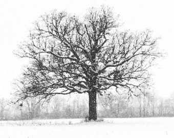 Ancient Oak Tree in Middle of Field in a Snow Storm - Art Photo Print - white, black, grey