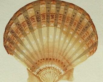 Sea shell scallop or clam original watercolour illustration painting beach ocean coastal collection set