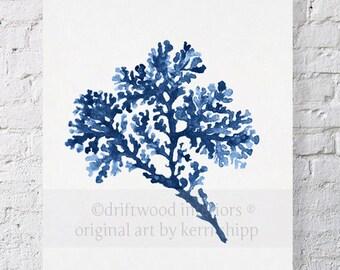 Seagrass in Denim Blue Watercolor Print 11x14 - Blue Coral Art Print - Watercolour Print - Denim Sea Corals - Vintage Sea Life