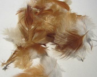 24 cruelty free assorted ginger feathers 1 to 3 inches CFF27