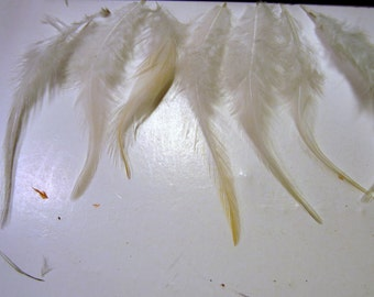 24 White Cruelty free Feathers   2 to 4 inches CFF30