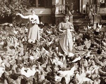 Chickens Greeting Card - Hens and Roosters Fill Yard in NJ Women Surrounded