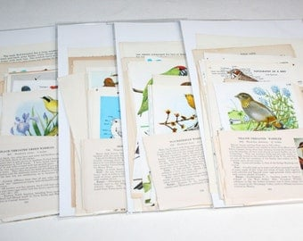 25 Piece Bird Grab Bag Kit - Vintage Ephemera Collage Kit
