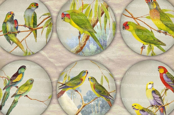 Australian Birds Parrots Budgerigars Aussie Budgies 2.5inch Circles Rounds Compacts Magnets Digital Collage Sheet Instant Download 073