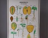 Vintage School Science Chart / 60's School Seeds Poster
