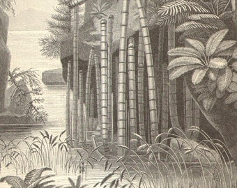 1906 Antique Engraving of a Triassic Landscape, Earliest Land Plants - Triassic Period About 250 Million Years Ago