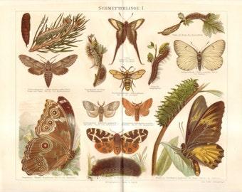 1890 Antique Chromolithograph of  Butterflies, Moths and their Caterpillars
