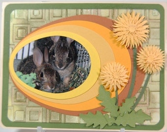 Greeting card, cottontail bunnies, Easter or Spring