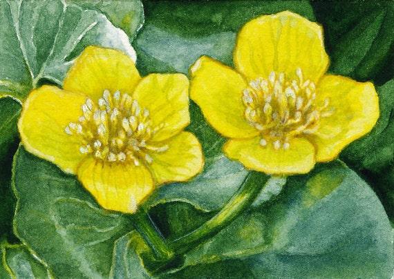 Marsh Marigolds Watercolor Painting by SaylorWolfWatercolor