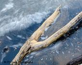 Driftwood Seascape Photography, driftwood beach art, Office wall decor, blue, tan