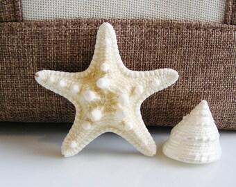 Baby Knobby White Starfish 2 - 3 inches  (1 pc)