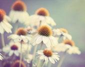 Flower Photography, Aqua Wall Art, Picture of Flowers, Nursery Wall Art, White Pale Mint Cyan Teal Boho Decor, Wildflowers 8x10, 11x14 Print