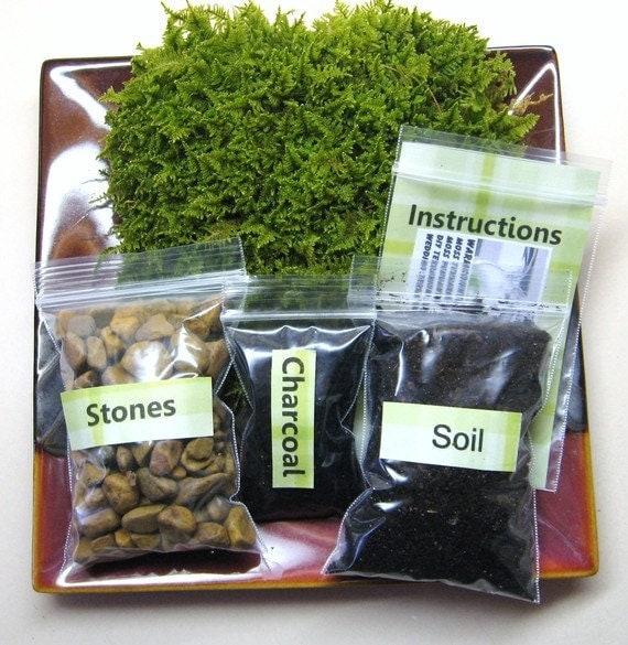 Terrarium kit deals on 1001 blocks moss terrarium kit diy moss terrarium kit do it yourself terrarium solutioingenieria Images