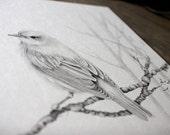 Bird Drawing Custom Pencil Drawing Woodland Bird Drawing Custom Art Personalized Fine Art Bird Art