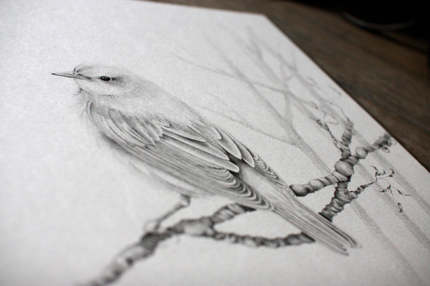 Bird Drawing Custom Pencil Drawing Woodland Bird Drawing