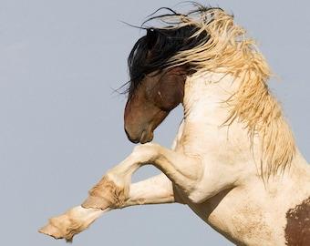 Warbonnet - Fine Art Wild Horse Photograph - Wild Horse - Warbonnet - Fine Art Print
