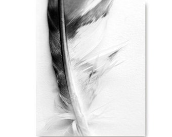 Feather photo, black and white, nature photo, nature print, black and white print, feather photography, feather print, feather art print,