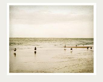 Seagull Photo, beach photography, wall art, ocean print, waters, pier, coastal living, seaside, bird photography, seagull print, beach decor