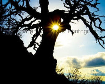 Tree Sun Flare photography print
