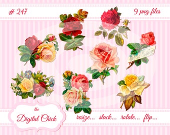 Digital Clipart, instant download, Vintage Rose Images--yellow roses, pink roses, red roses, rose bouquet, morning glory--10 PNG files   247